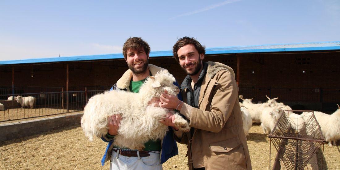 [Étude de cas] Des pulls, des chèvres et des réseaux sociaux
